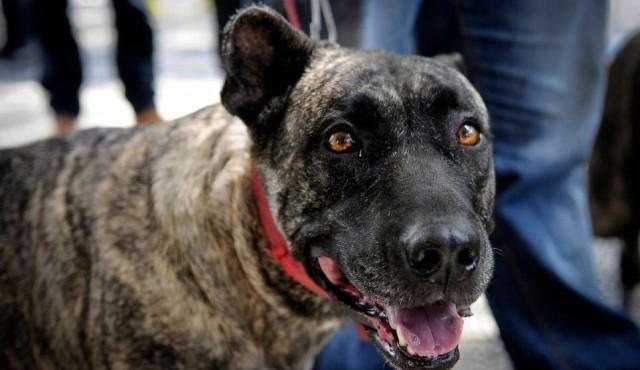 Nueva reglamentación sobre tenencia de perros con multas de hasta 10.000 pesos
