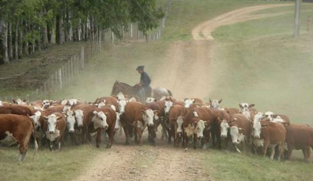 Habilitan pastoreo en rutas y caminos por déficit hídrico