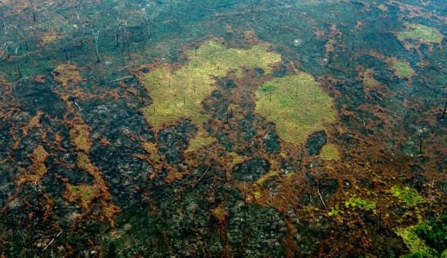 La Amazonia perdió 8% de su territorio en 18 años por deforestación