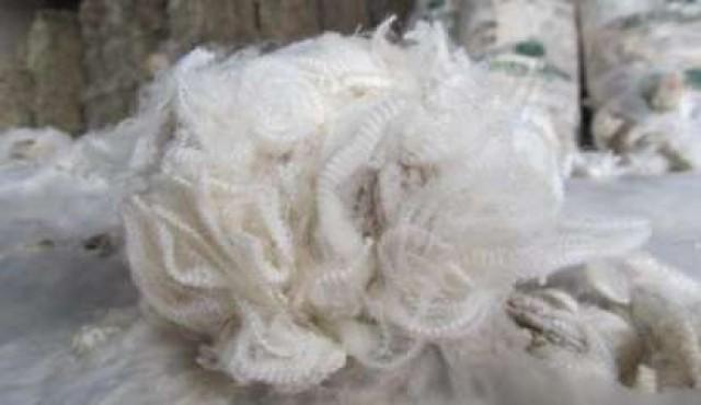 Lana extrafina: del basalto uruguayo a tejidos exclusivos en Japón