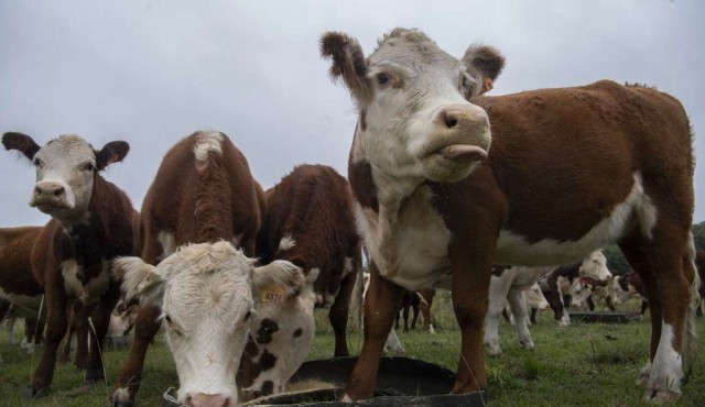 """A la búsqueda de una ganadería """"más verde"""" en Uruguay"""