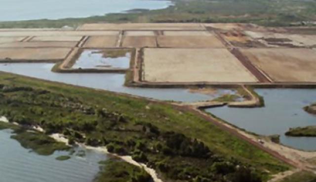 Montes del Plata construirá su planta de celulosa en Uruguay