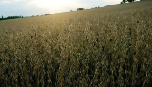 """""""Irresponsable"""" uso de insecticida altamente tóxico en Guichón"""