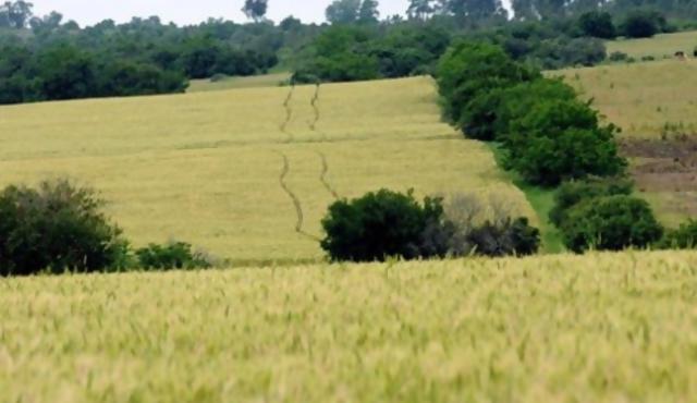 Cuando Uruguay era un desierto habitado por dinosaurios