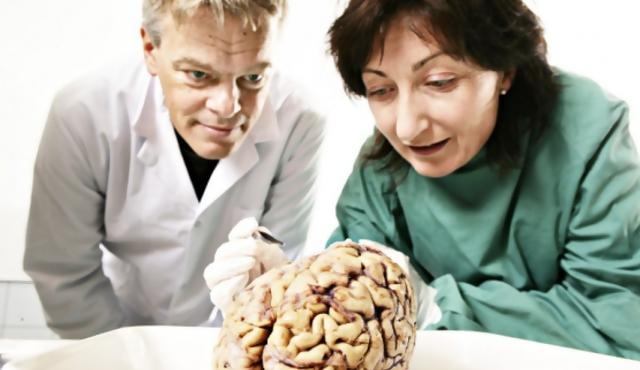 Del alzhéimer a la robótica, los impactos del GPS cerebral