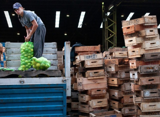 Portal 180 - Mercado Modelo cerró el tercer año con récord de ingreso de frutas y hortalizas