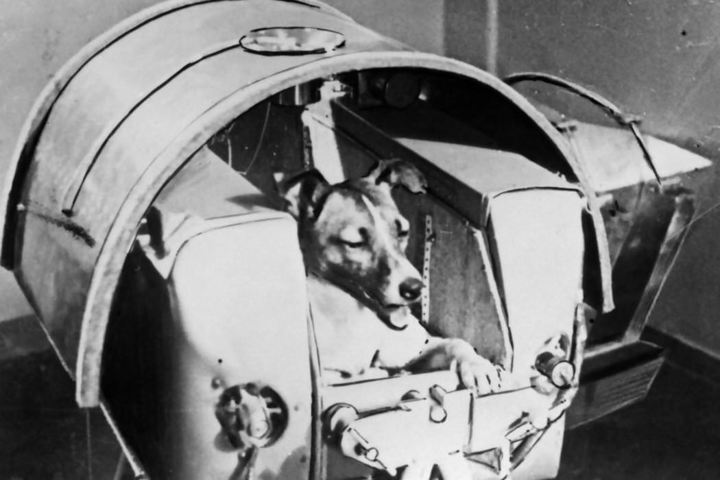 La indignación de Darwin por la ausencia de Laika en el Museo Cosmonáutico ruso — Audios   Del Sol 99.5 en el Mundial Rusia 2018