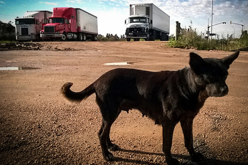 Los veterinarios y su propuesta para perros potencialmente peligrosos — DelSol | Del Sol 99.5 en el Mundial Rusia 2018