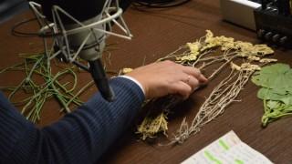 Los peligros del uso de la manzanilla en niños en un minuto - MinutoNTN - DelSol 99.5 FM