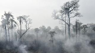 Ayuda de NatGeo a maestras: la Amazonia no es el pulmón del mundo - Audios - DelSol 99.5 FM