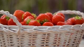 Alimentos salvajes: la tendencia alimenticia de agachar el lomo y buscar hongos, raíces - Gustavo Laborde - DelSol 99.5 FM