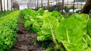 Justa, ecológica y renovable: las bases de la agroecología y su plan en Uruguay - Entrevistas - DelSol 99.5 FM