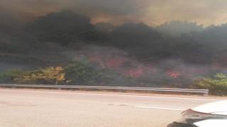 """Incendios en Rocha y Canelones: """"El fuego está descontrolado"""" - Entrevistas - DelSol 99.5 FM"""