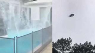 El cordero en la piscina y la crítica a Lacalle por la llegada de argentinos - Columna de Darwin - DelSol 99.5 FM