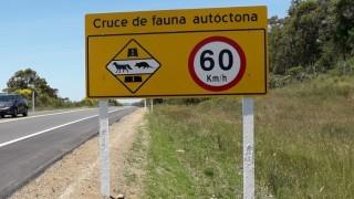 Animales en la ruta, ¿cruzando o al volante? - Las seis plagas del verano - DelSol 99.5 FM