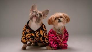 Los perros como hijos  - Manifiesto y Charla - DelSol 99.5 FM
