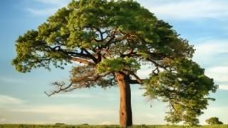 ¿Cuántos lapices se pueden hacer de un árbol?  - Sobremesa - DelSol 99.5 FM