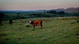 """El """"pocillo de natalidad"""" de Uruguay y la ganadería baja en carbono - NTN Concentrado - DelSol 99.5 FM"""
