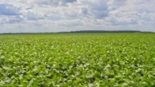 Soja: de expectativas de una gran cosecha a la certeza de una mala cosecha - Entrevistas - DelSol 99.5 FM