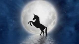 Darwin, el primer unicornio uruguayo y el destino común de periodistas y actores porno  - Columna de Darwin - DelSol 99.5 FM