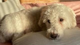 Alimento a mi perro a vegetales, ¿puedo decir que es vegetariano? - Sobremesa - DelSol 99.5 FM