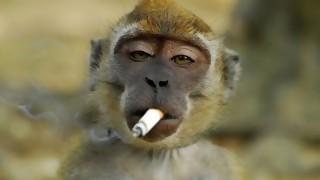 Seamos más monos - Manifiesto y Charla - DelSol 99.5 FM