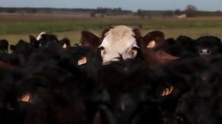 ¿Qué debería producir Uruguay si se dejara de exportar carne? - Sobremesa - DelSol 99.5 FM