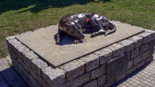 El Gaucho: la estatua que recuerda a un perro de nadie, pero de todos los duraznenses - ¡Qué animal! - DelSol 99.5 FM