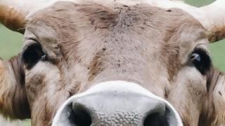"""Corte: """"Tenemos que hacer carne que los animales tienen conciencia y sienten sufrimiento"""" - Entrevista central - DelSol 99.5 FM"""