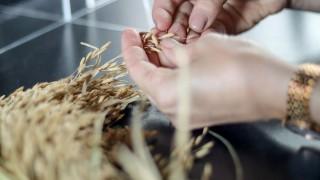 El arroz, su cultivo, su química y sus secretos en la cocina - Leticia Cicero - DelSol 99.5 FM