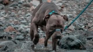 """Un proyecto busca prohibir los perros de razas """"potencialmente peligrosas"""" - Audios - DelSol 99.5 FM"""