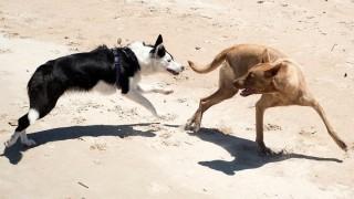 """Perros peligrosos: """"si no logramos ordenar esto, vendrán las soluciones crueles"""" - Entrevistas - DelSol 99.5 FM"""