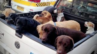 Perros: un minuto, mucha normativa y nada de control - MinutoNTN - DelSol 99.5 FM