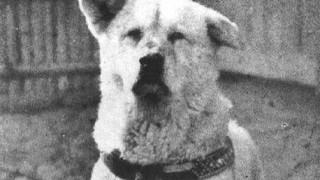La historia de Hachikō, el perro fiel - ¡Qué animal! - DelSol 99.5 FM