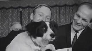 """La historia de Pickles, el perro que """"salvó"""" la Copa del Mundo del 66 - ¡Qué animal! - DelSol 99.5 FM"""
