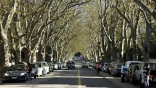 ¿Cuánto cuesta sacar un árbol en la ciudad? - La Charla - DelSol 99.5 FM