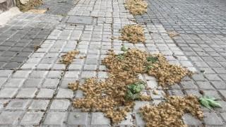 La Pelusa de los Plátanos NO es Uruguay, el Cementerio del Buceo NO es Buceo. El turismo de 3ª dosis NO es Uruguay y Antía NO es la voz de la ciencia - Columna de Darwin - DelSol 99.5 FM