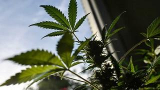 """Las recomendaciones que """"atentan contra la esencia del pastor"""" y el cannabis medicinal  - NTN Concentrado - DelSol 99.5 FM"""