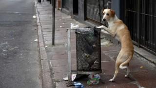 Perros peligrosos o callejeros: la propuesta de los veterinarios - Informes - DelSol 99.5 FM
