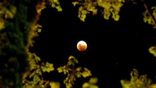 Darwin, Arjona y la luna de sangre - Columna de Darwin - DelSol 99.5 FM