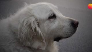 El video de la jubilación de Salu - Especiales - DelSol 99.5 FM
