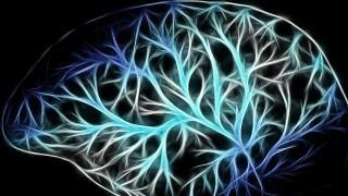 ¿Qué es lo que diferencia al cerebro humano de los demás? - NTN Concentrado - DelSol 99.5 FM
