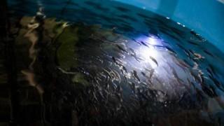 """""""Si se alimentan bien, los pescados cultivados son tan saludables como los capturados"""" - Entrevistas - DelSol 99.5 FM"""