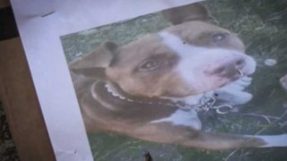 El caso del perro Roko - Cambalache - DelSol 99.5 FM