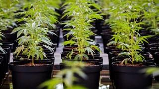 El día anterior a que el cannabis sea legal en Canadá - NTN Concentrado - DelSol 99.5 FM