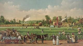 Algodón y esclavitud en Estados Unidos. Primera parte - Segmento dispositivo - DelSol 99.5 FM