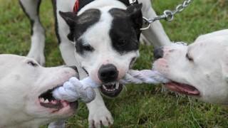 El permiso para portar perros y el pastor neopentecostal que denunció a Marita - NTN Concentrado - DelSol 99.5 FM