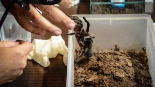 DelSol - Tipos de arañas en Uruguay y por qué no tenerles miedo