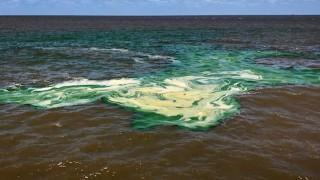 Todo lo que querías saber sobre las cianobacterias - Desasnandome - DelSol 99.5 FM