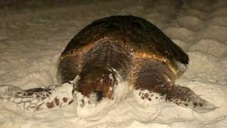 Tartabinhas: al cuidado de las sociables tortugas de Bombinhas - Entrevistas - DelSol 99.5 FM